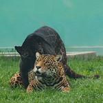 Mo, 28.09.15 - 15:04 - Zoo Lima