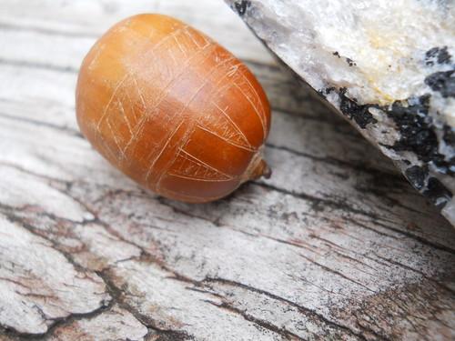 decorated acorn
