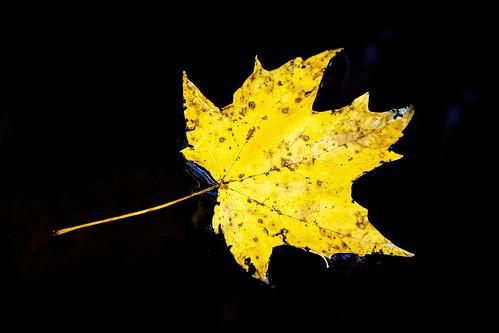tree fall canon leaf maple connecticut newengland foliage millpond 5diii