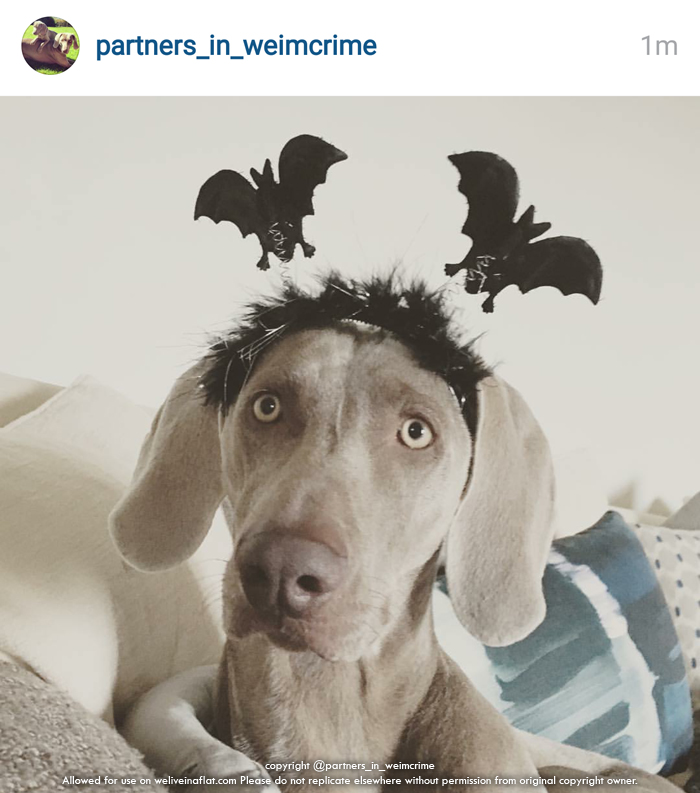 Whos Not Scary These 10 Cute Halloween Dogs In Costume We Live