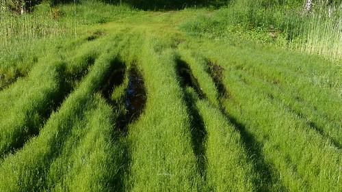 summer green field grass finland geotagged july fin 2015 kankaanpää satakunta 201507 20150703 geo:lat=6176358160 geo:lon=2255021095