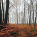 Autumn floor by kenny barker