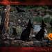Casting their spells & their webs--- by kfpsardou