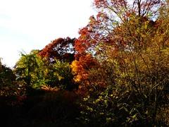 Brookside Preserve - Autumn (37)