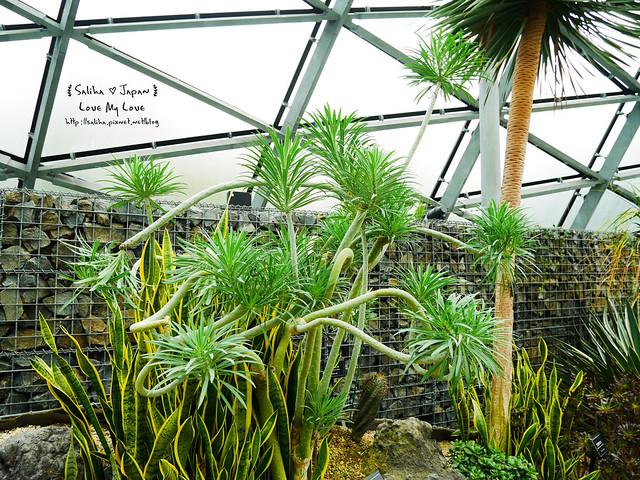 日本東京景點新宿御苑溫室植物 (15)