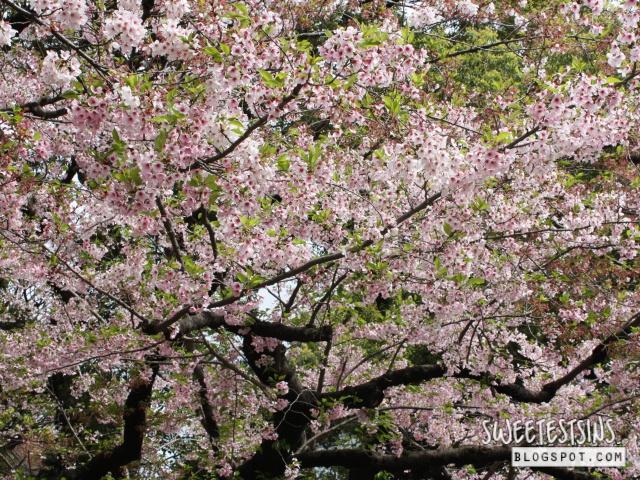 japan tokyo trip ueno park 19