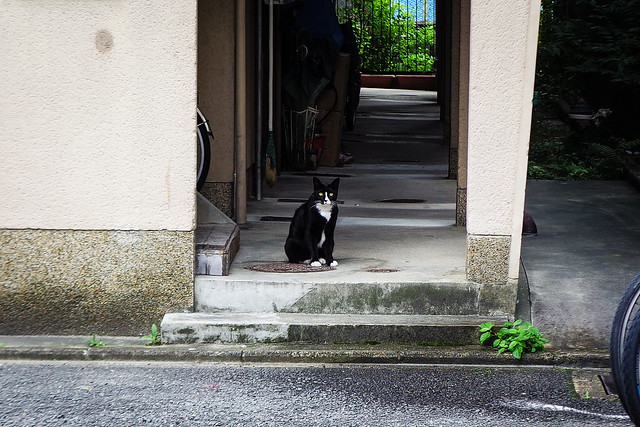Today's Cat@2015-09-13
