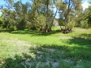 Spring Pool, Summer Grassland