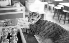 houtong village cat