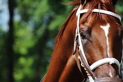 Saratoga Race Course, August 26, 2015