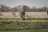 Etosha National Park - Elephant by mystrg