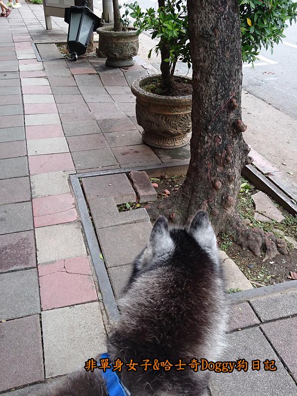 Doggy颱風22