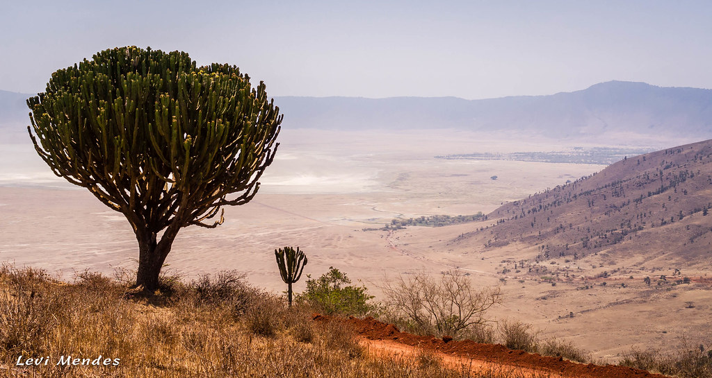 Tanzania-Enter the Ngorongoro Crater