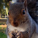For Squirrels, Every Time Is Snack Time by andyi