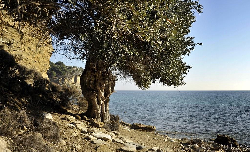 Thassos-Livadi