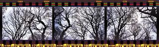 winter tree triptych