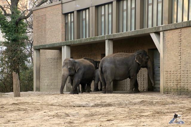 Zoo Berlin 27.11.2015   4