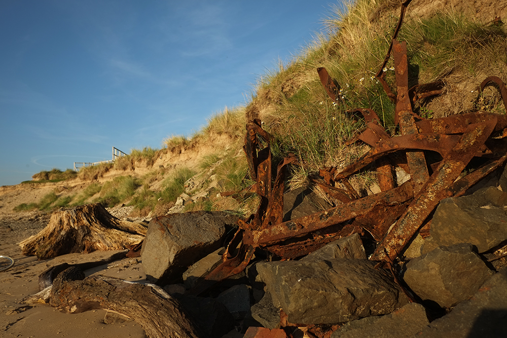 Hunting Driftwood