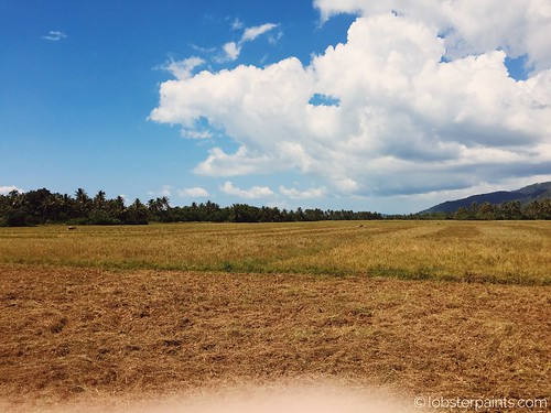 morning travel sky cloud field clouds photography rice paddy philippines catanduanes bicol bato ricepaddyfield
