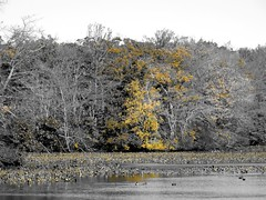 Mill Pond Park -- Autumn (5)