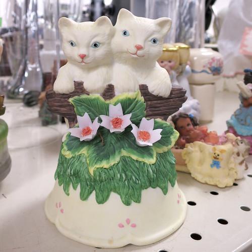 slightly deformed cats