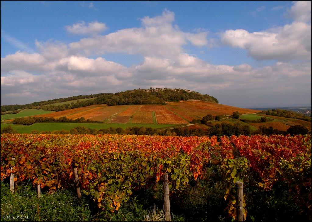 Vignoble en automne de la Côte Chalonnaise  21547040214_113d3f0a54_b