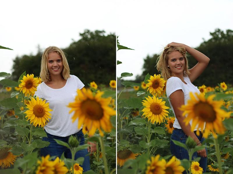 Sonneblumenfeld Alisha September 2015 298gimp-tile