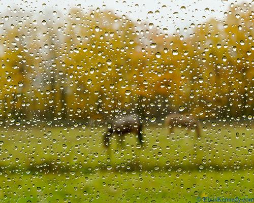 Horses in Raindrops