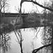 Tree Reflection by John G Meadows