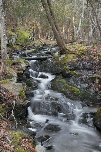 park new lake tree water saint rock forest john stream exposure outdoor brunswick newbrunswick lilly fisher brook delayed saintjohn rockwood rockwoodpark lillylake delayedexposure fisherlake nikond3300 d3300