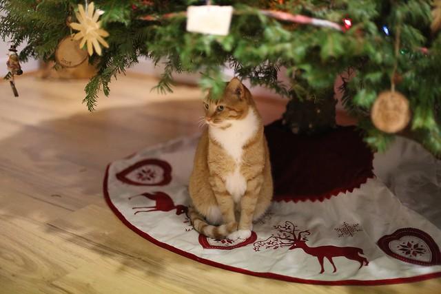 "Bhakti under ""chubby tree"""