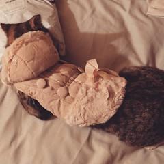 My cat daughter Paris's new winter coat!*🐱🐈 #cat #cats #animal #animals #catlover #animallovers #petlovers #pet #pets #animalselfies #selfies #animalselfie #selfie #wintercoat #coat #animalsdressedup #catsdressedup #catsdressedup  #gay #gayfab #l