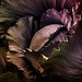 red cabbage by marianna-a.