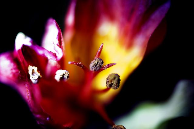 The nightmare flower