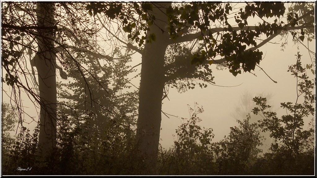 Matin de brouillard 21386534148_4334ff2d38_b