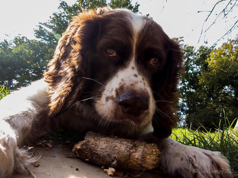 Max has got a stick