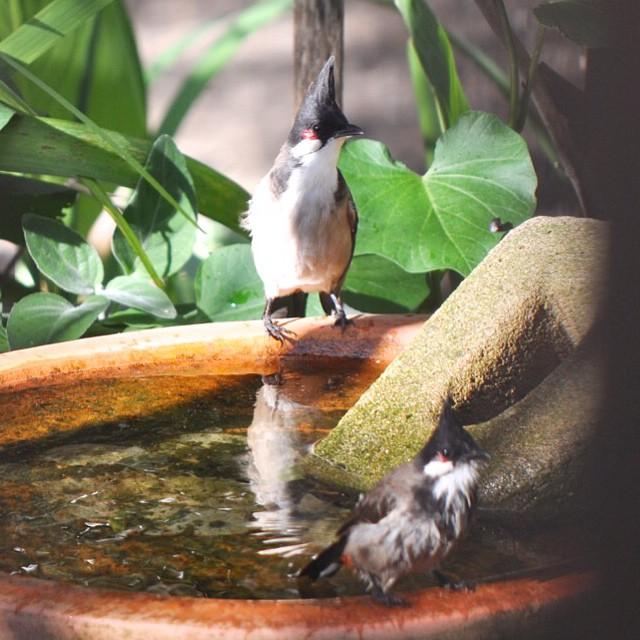 flowerpress backyard bird count
