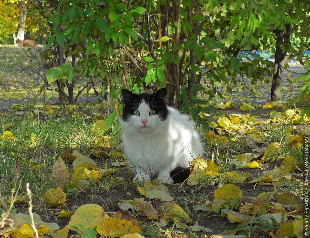 20151026_lutsk_cat_001