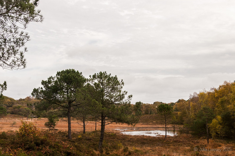 There's a new pond on the heath