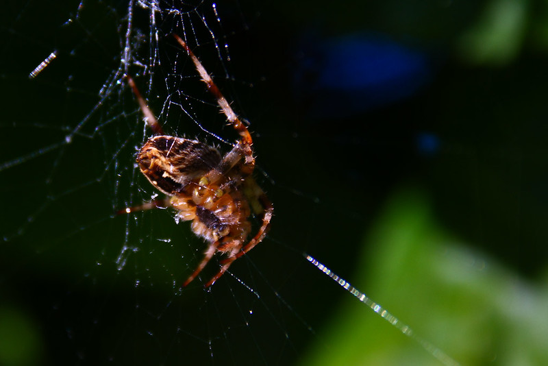 Spiders in Stralsund 2010