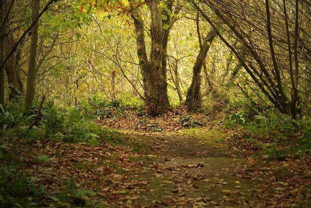 One Four Challenge November: Directional Lighting