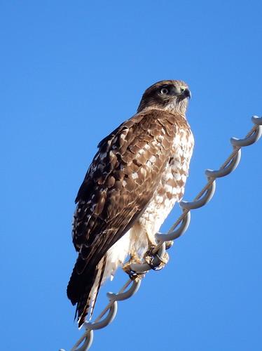 Onderweg naar Chiricahua NM - bird