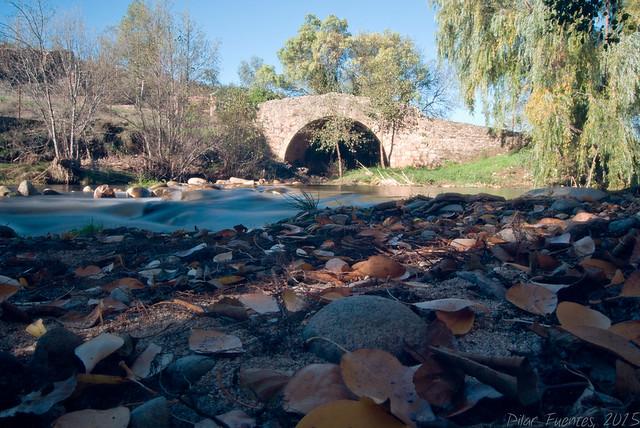 El otoño en la orilla