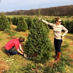 @agentvanilla12 cutting down her Christmas tree. @czeglin helped too, I guess. #christmastree #gavertreefarm #tistheseason