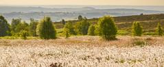 HolderBlacka Moor in Early Summer