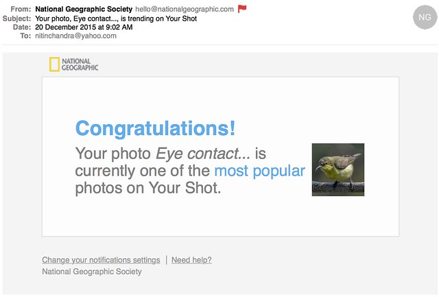 Your photo Eye contact is trending on Your Shot