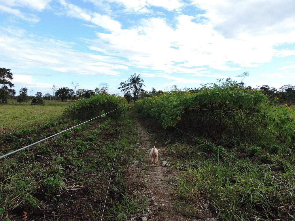 Caminos para manejo de ganado