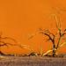 Dead Tree Dune Shadows by Panorama Paul