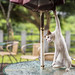 standing cat by Thunderbolt_TW
