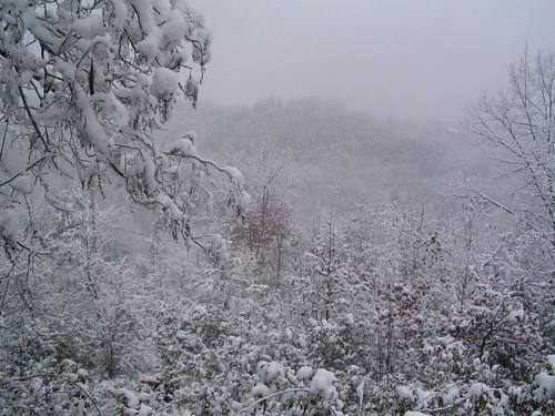 christmas vacation landscape northcarolina marble